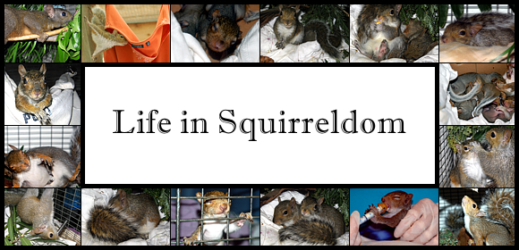 Life in Squirreldom