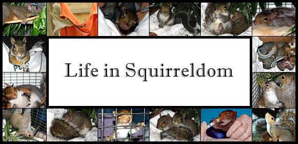 Life in Squirreldom